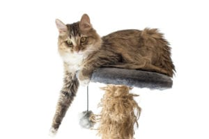 Elderly Care in Cascade MI: Should My Elderly Parent Adopt a Cat?