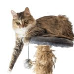 Home Care in Jenison MI: Are Cats a Good Idea for Seniors?